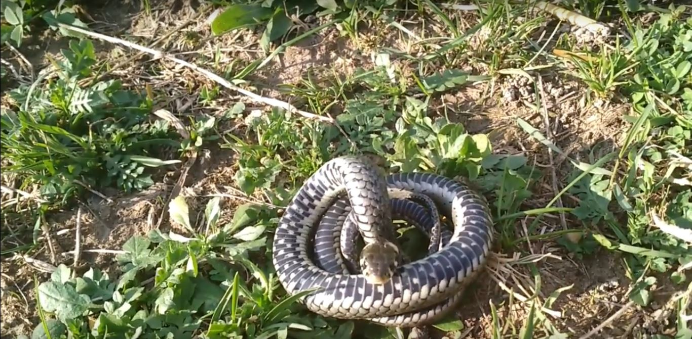 Does Rope Work as a Snake Repellent?